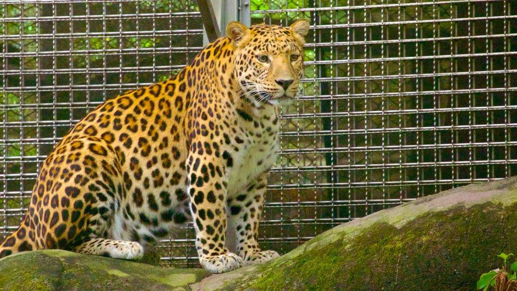 Zoo de Taipei ofreciendo animales del zoológico y animales peligrosos
