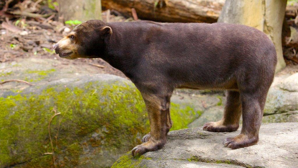 Zoo de Taipei que incluye animales peligrosos y animales del zoológico