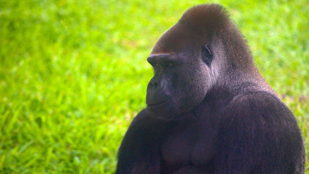 Zoo de Taipei que incluye animales terrestres y animales del zoológico