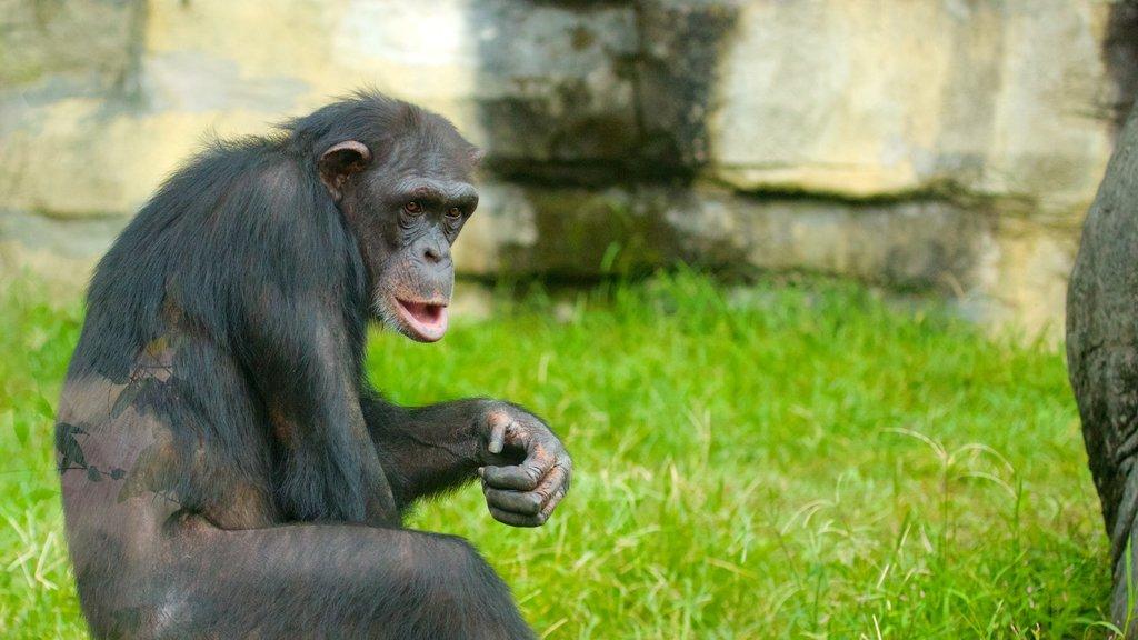 Zoo de Taipei que incluye animales del zoológico y animales terrestres