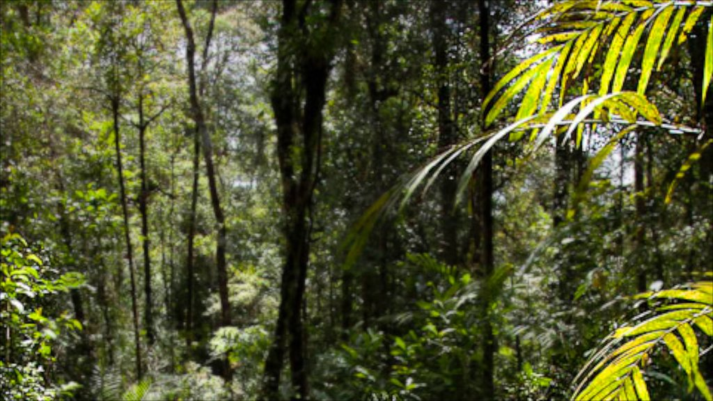 Kota Kinabalu featuring forest scenes and landscape views