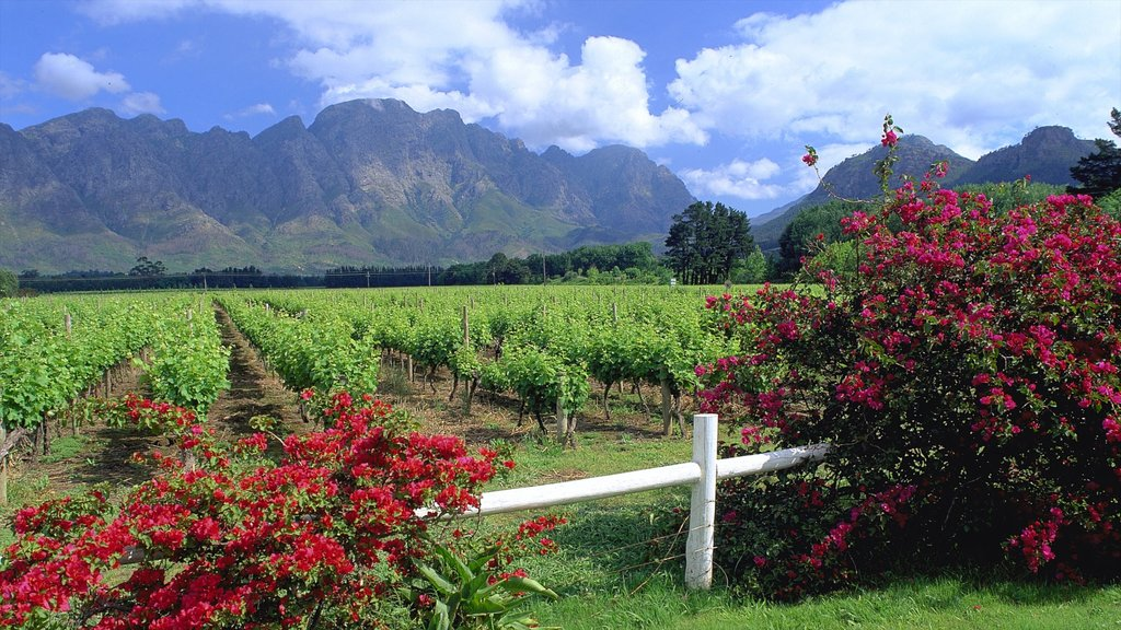 Franschhoek showing wildflowers, farmland and landscape views