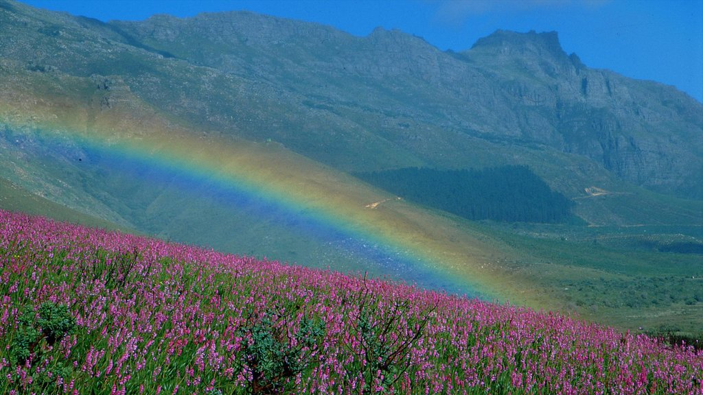 Stellenbosch featuring flowers, mountains and landscape views