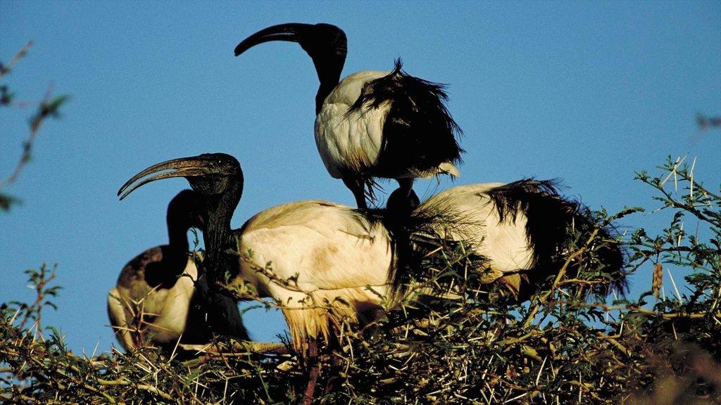 Bela-Bela featuring bird life