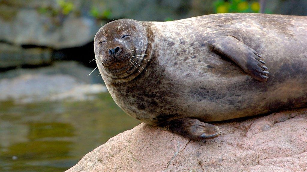 Skansen featuring zoo animals and marine life