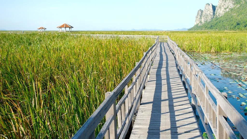 Sam Roi Yot National Park which includes landscape views, wetlands and a bridge