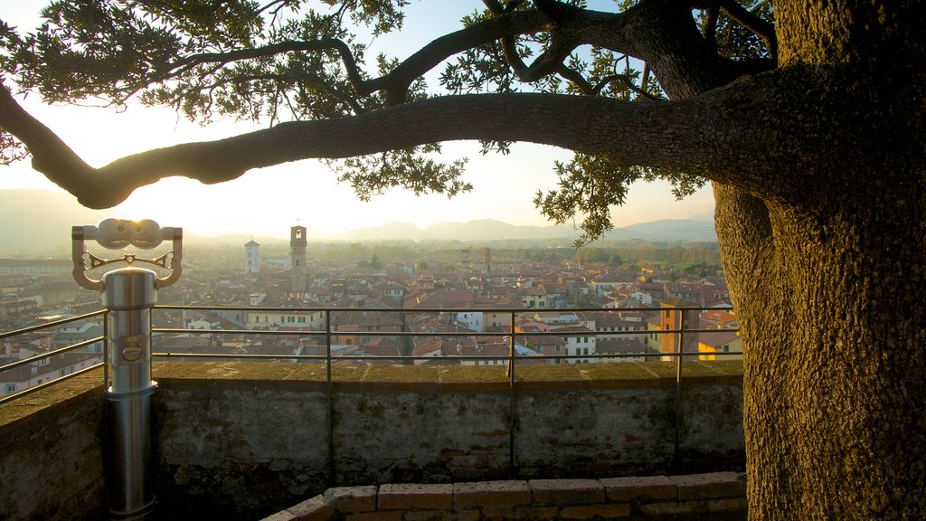 Guinigi Tower showing a sunset, a city and views