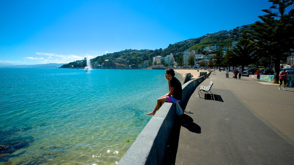 Oriental Bay Beach which includes a coastal town and general coastal views as well as an individual male