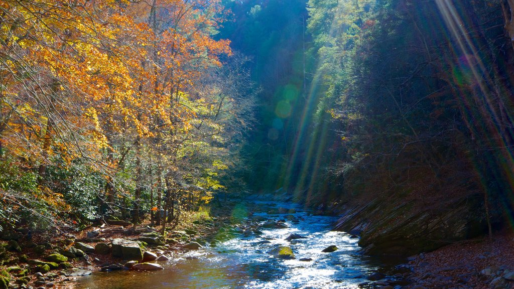 Great Smoky Mountains National Park which includes fall colors, forests and a river or creek