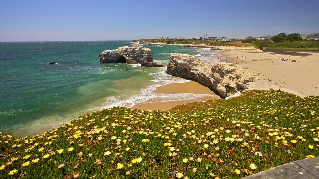 Santa Cruz ofreciendo una playa, vistas generales de la costa y escenas tropicales