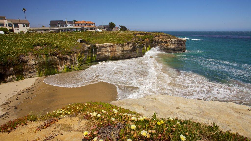 Santa Cruz que incluye costa escarpada, flores y vistas generales de la costa