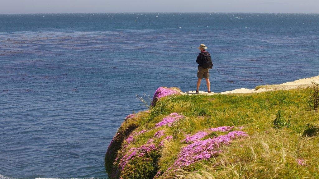 Santa Cruz mostrando senderismo o caminata, costa rocosa y flores
