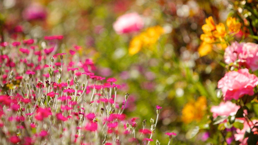 Santa Cruz que incluye flores y flores silvestres