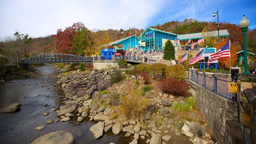 Ripley\'s Aquarium of the Smokies featuring marine life, a river or creek and a bridge