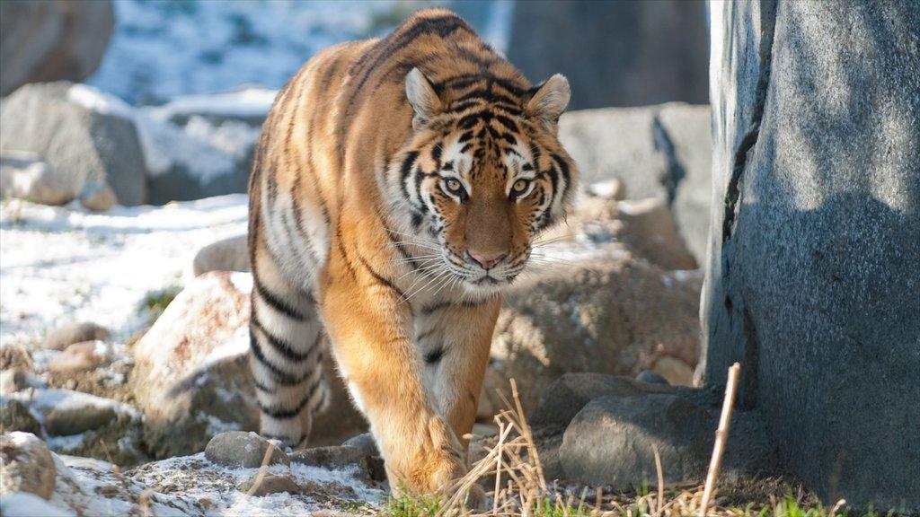 Columbus Zoo and Aquarium showing zoo animals and dangerous animals