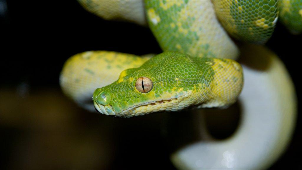Columbus Zoo and Aquarium featuring zoo animals and dangerous animals
