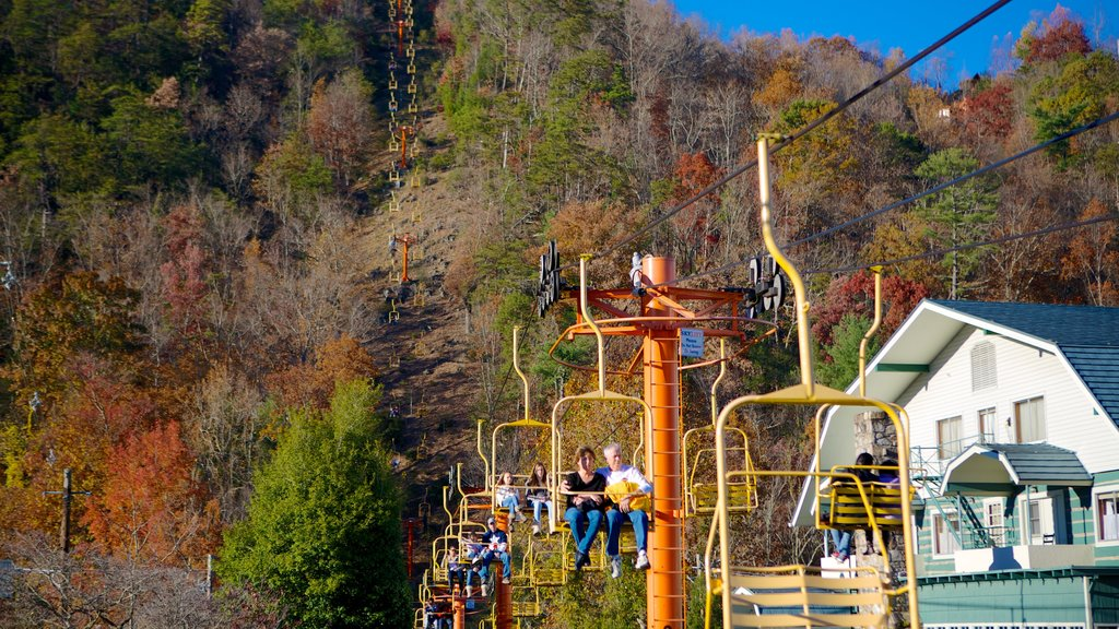 Gatlinburg Sky Lift showing forests, a gondola and autumn leaves