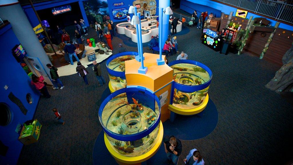 Ripley\'s Aquarium of the Smokies showing interior views and marine life