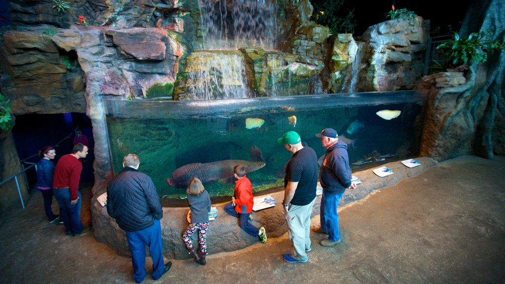 Ripley\'s Aquarium of the Smokies which includes interior views and marine life as well as a small group of people
