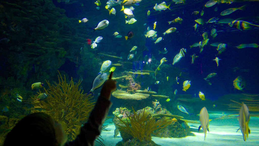 Ripley\'s Aquarium of the Smokies showing marine life