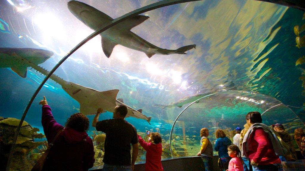Ripley\'s Aquarium of the Smokies featuring marine life and interior views as well as a large group of people