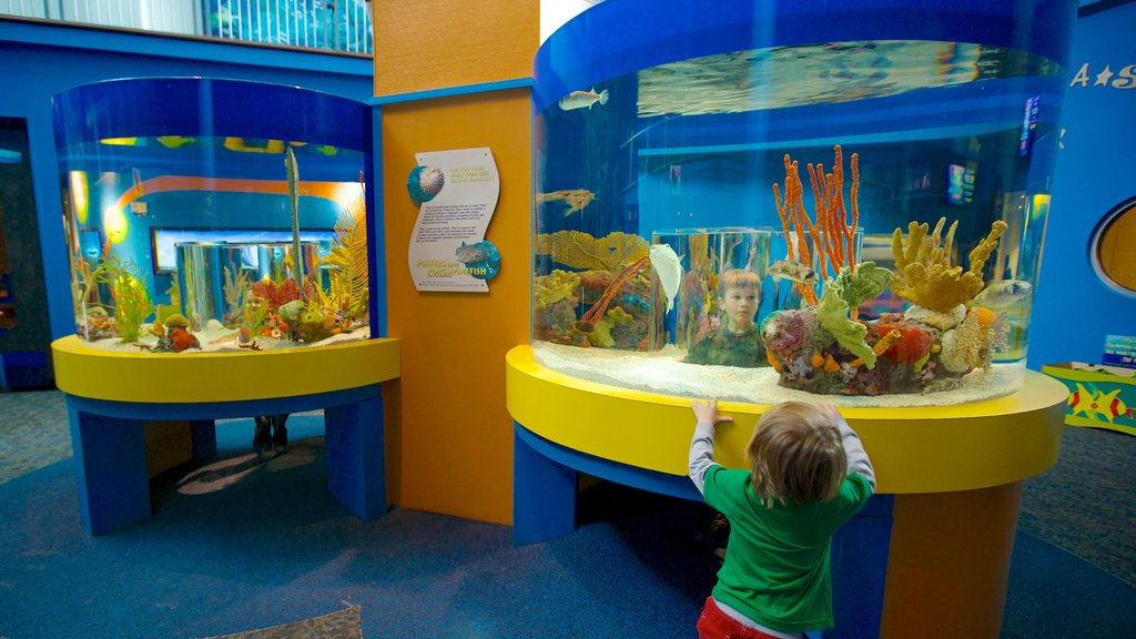 Ripley\'s Aquarium of the Smokies which includes marine life and interior views as well as an individual child