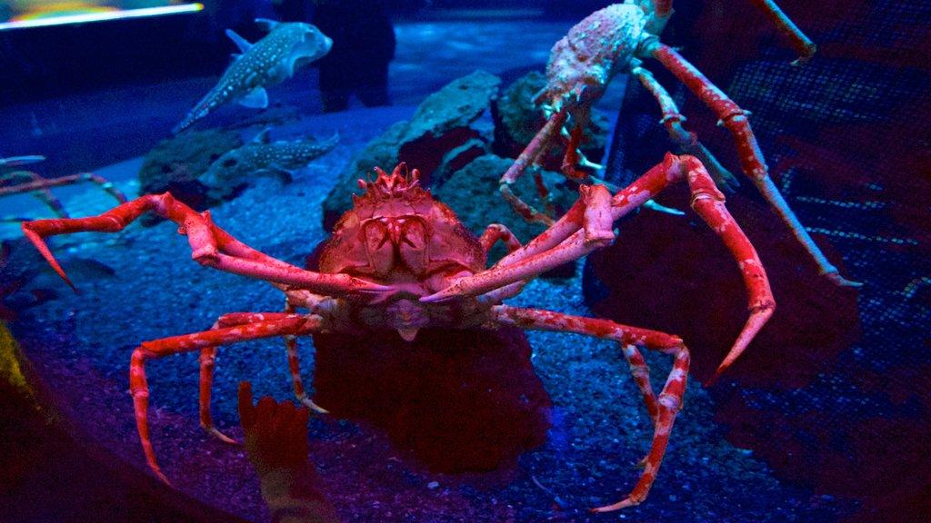 Ripley\'s Aquarium of the Smokies featuring marine life