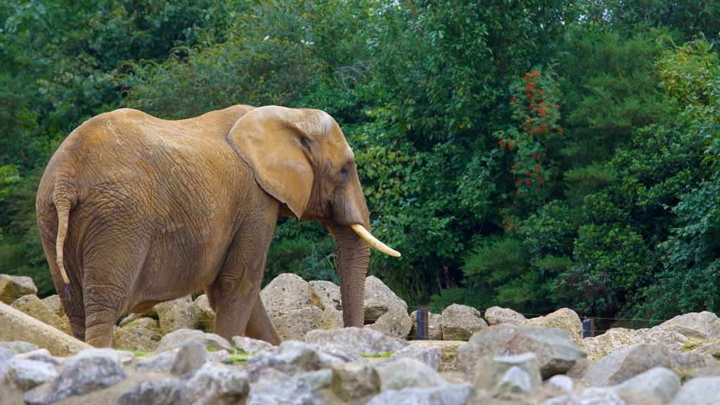 Colchester Zoo showing land animals and zoo animals