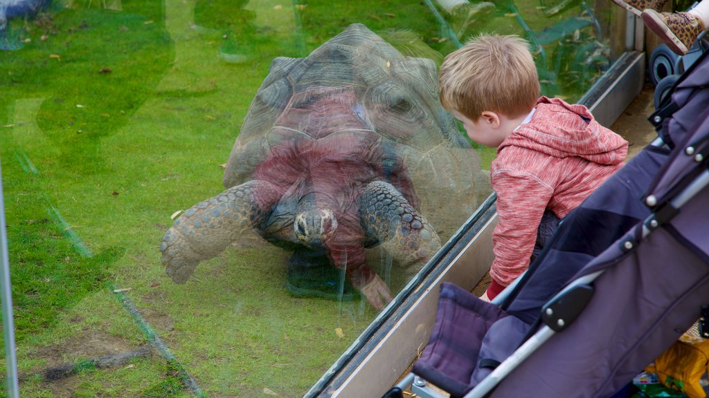 Colchester Zoo which includes animals and zoo animals as well as an individual child
