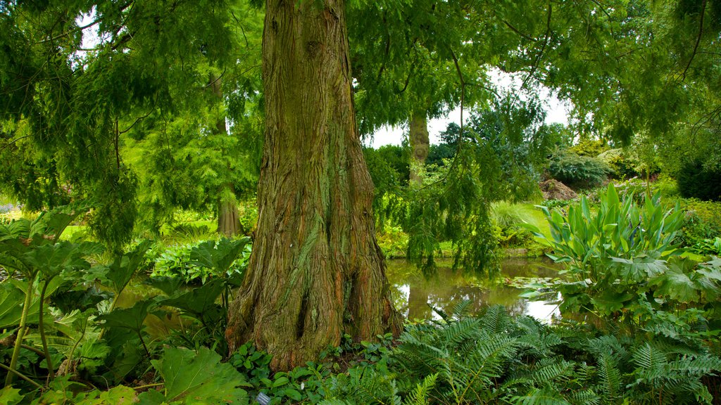 Beth Chatto Garden which includes a pond, a garden and forests