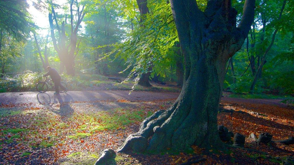 Epping Forest que incluye los colores del otoño, ciclismo y bosques