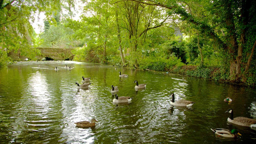 Waltham Abbey featuring a garden, forests and bird life