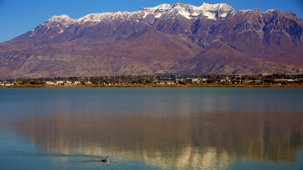 Utah Lake State Park showing a park, a lake or waterhole and mountains