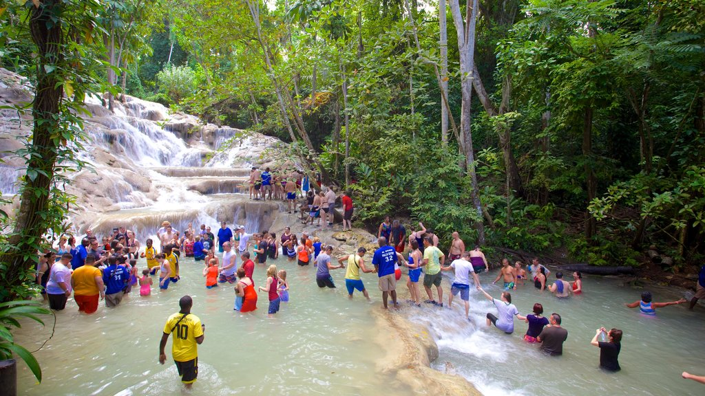 Dunn\'s River Falls showing forest scenes, swimming and a waterfall