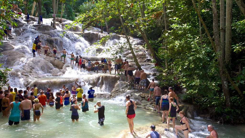 Dunn\'s River Falls which includes forest scenes and swimming as well as a large group of people