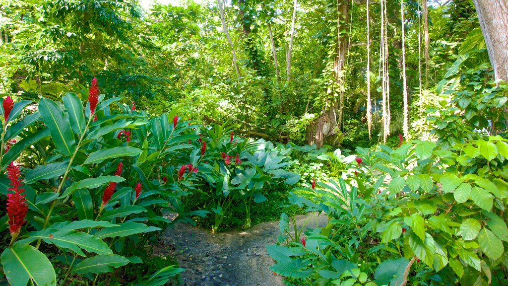 Mystic Mountain featuring flowers and rainforest