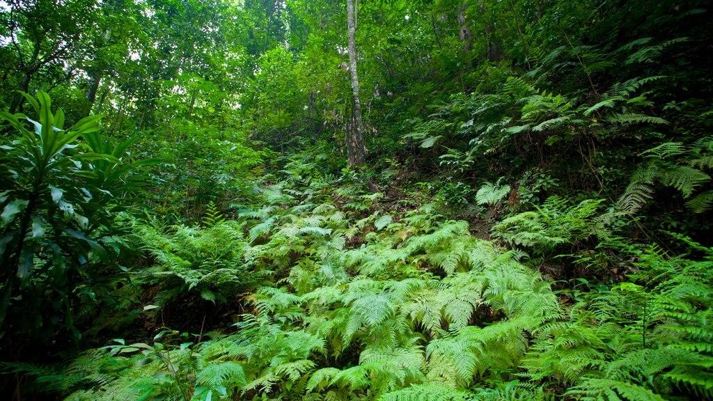 Fern Gully showing rainforest