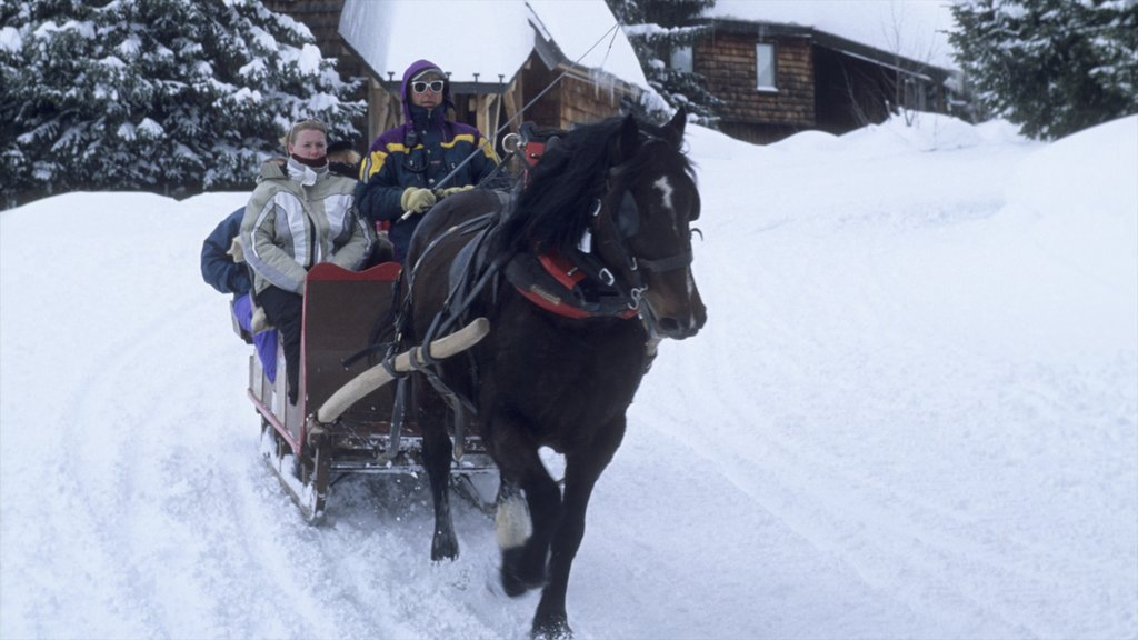Morzine showing horseriding and snow