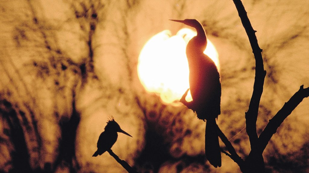 Mpumalanga - Limpopo which includes a sunset and bird life