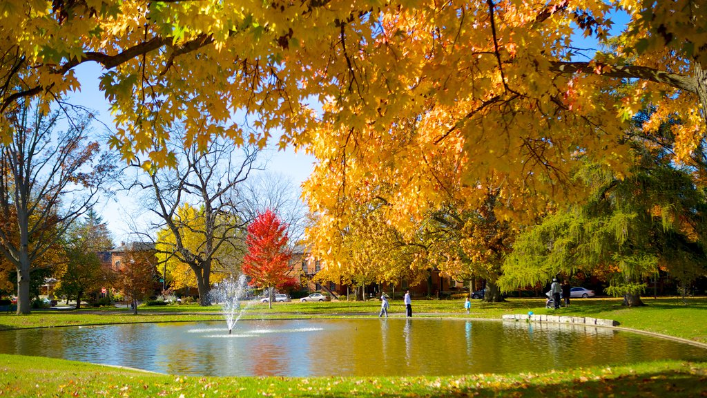 Schiller Park showing a pond, a fountain and a park