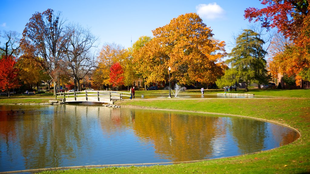 Schiller Park showing a garden, a pond and fall colors