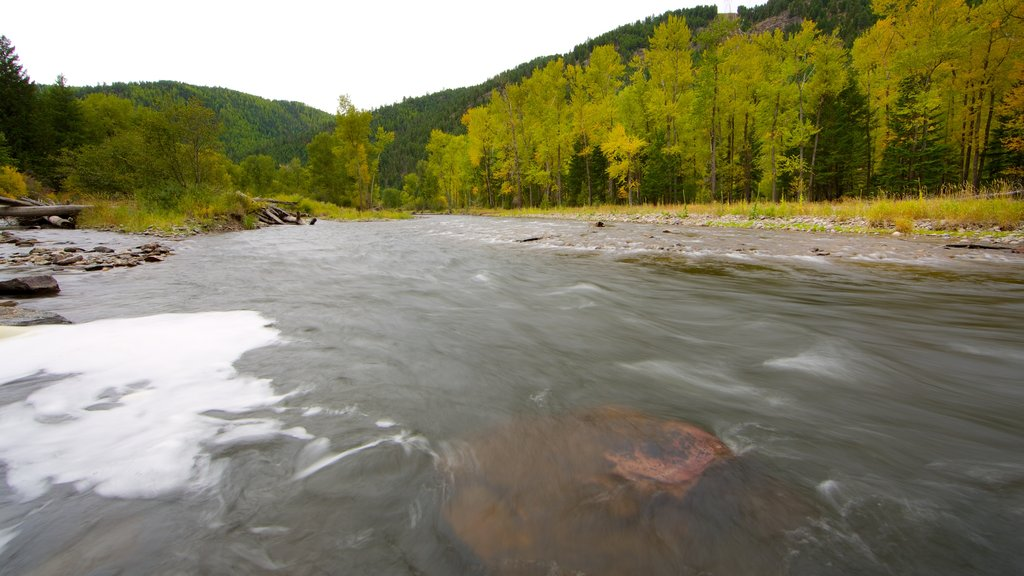 Missoula featuring tranquil scenes, a river or creek and forests
