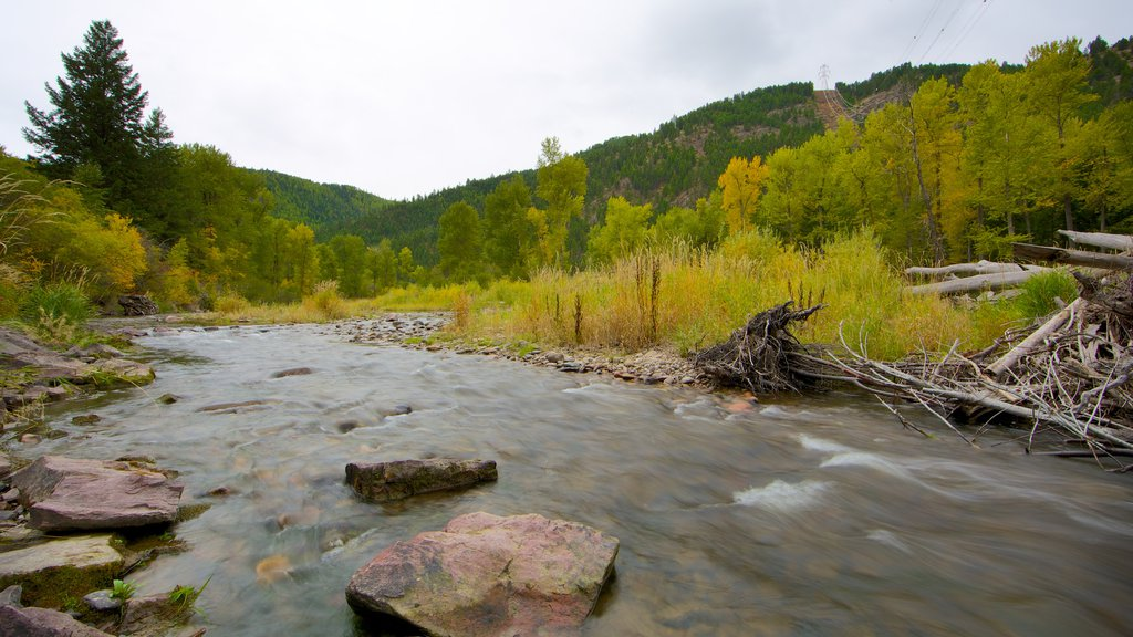Missoula which includes tranquil scenes, forest scenes and a river or creek