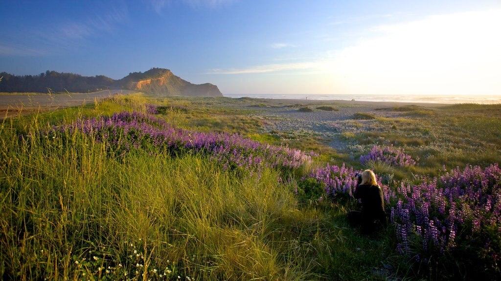 Parque nacional y parques estatales de Redwood que incluye escenas tranquilas, flores silvestres y vistas de paisajes