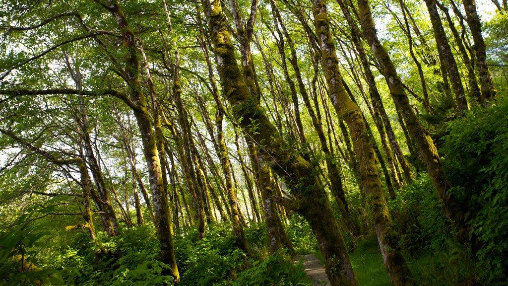 Parque nacional y parques estatales de Redwood que incluye escenas forestales
