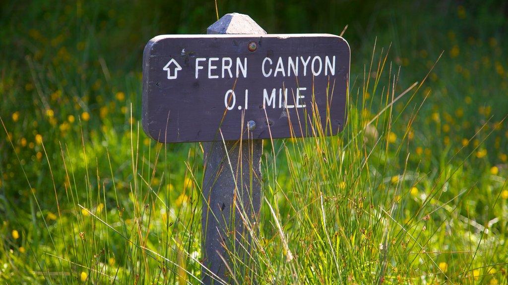 Parque nacional y parques estatales de Redwood ofreciendo señalización y escenas tranquilas