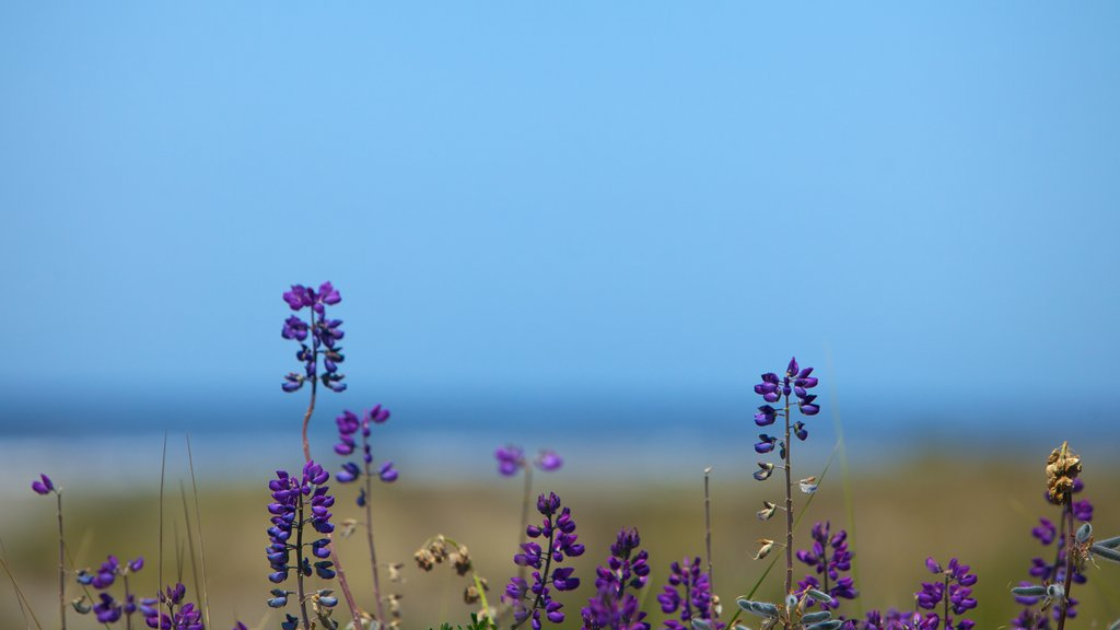 Parque nacional y parques estatales de Redwood que incluye flores silvestres