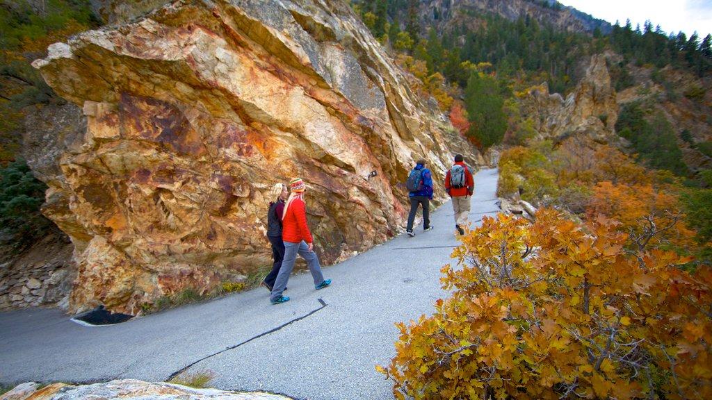 Monumento Nacional Cueva Timpanogos ofreciendo senderismo o caminata, un jardín y hojas de otoño