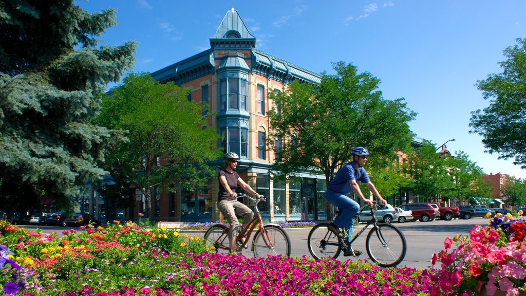 Fort Collins showing flowers, road cycling and a city