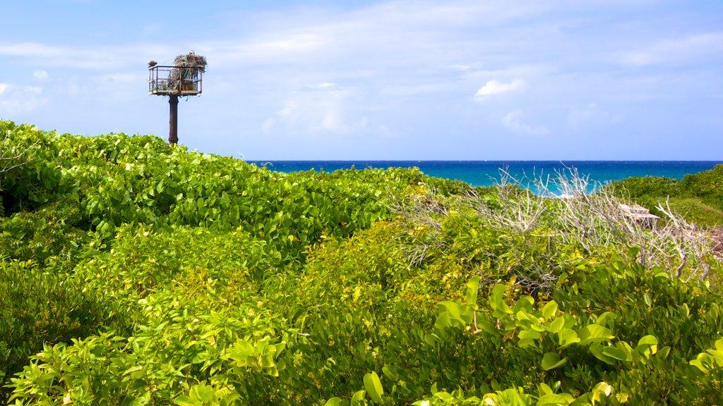 Turks and Caicos showing general coastal views